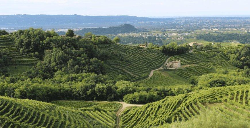 psr ocm agricoltura ismea veneto ocm vino