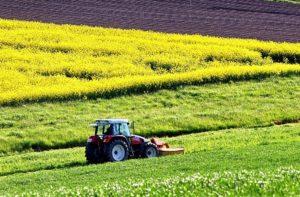 ismea agricoltura