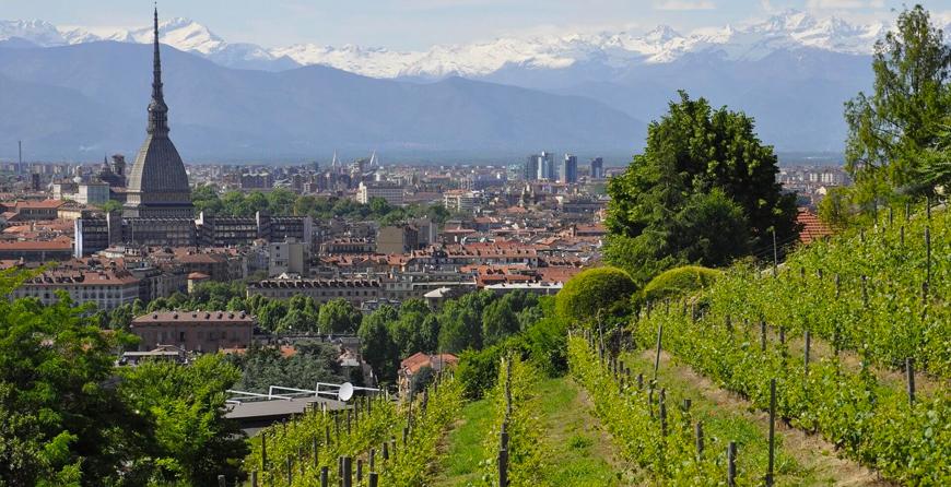 OCM Vino Piemonte Misura Investimenti annualità 2020-2021